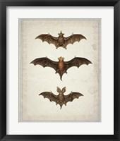 Framed Bats