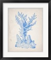 Blue Coral 1 Framed Print