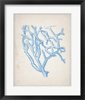 Blue Coral 2 Framed Print