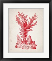 Red Coral 1 Framed Print