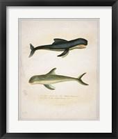 Whale 2 Framed Print