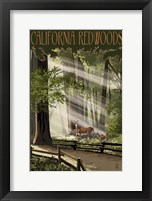 Framed California Redwoods