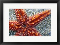 Framed Star Fish