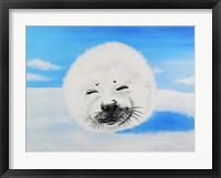 Framed Harp Seal