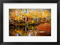 Framed Fall Pond Colors 1