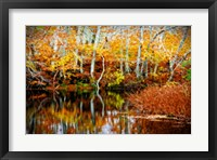 Fall Pond Colors 1 Framed Print
