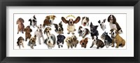 Framed Dogs Rule