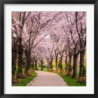 Framed Cherry Blossom Trail