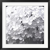 Annabelle Hydrangeas Framed Print