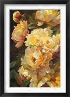 Peonies for Springtime Framed Print