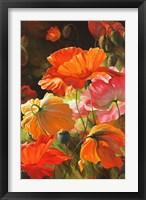Springtime Blossoms Framed Print