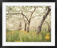 Framed Quiet Orchard