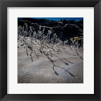 Framed Woolly Willow, Iceland