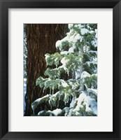 Framed Sierra Nevada Mts., CA