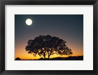 Framed Full Moon Over Silhouetted Tree