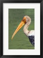 Framed Painted Stork, Bandhavgarh National Park, India