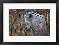Framed Black Rhinoceros, Etosha National Park, Namibia