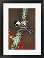 Framed Black-capped Chickadee Bird