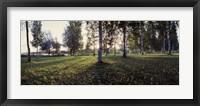 Framed Birch Trees, Imatra, Finland