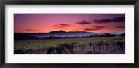 Framed Vineyard At Sunset, Napa Valley, California