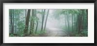 Framed Skyline Drive, Jackson-Washington State Forest, Indiana