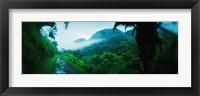 Framed Rainforest in Cayo District, Belize