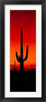 Framed Silhouette of Saguaro Cactus, Arizona