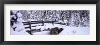 Framed Snowy Bridge in Banff National Park, Alberta, Canada