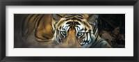Framed Bengal Tiger, India