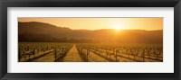 Framed Napa Valley Vineyard, California