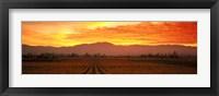 Framed Sunset over Napa Valley