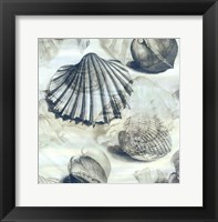 Framed Shell engraving 1