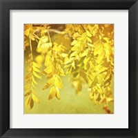 Autumn Photography I Framed Print
