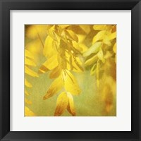 Autumn Photography II Framed Print