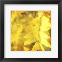 Framed Autumn Photography III