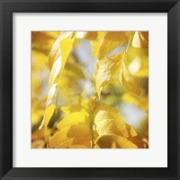 Framed Autumn Photography V