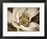 Framed Classic Magnolia II