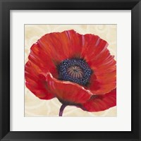 Red Poppy I Framed Print