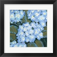 Blue Hydrangeas I Framed Print