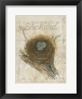 Nest - Blackbird Framed Print