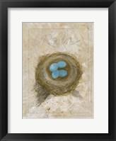 Framed Nest - Robin