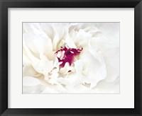 White Linen Peony II Framed Print