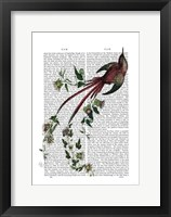 Framed Passion Flower Bird