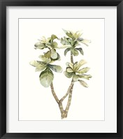 Tropical Watercolor Leaves III Framed Print