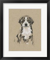 Breed Sketches II Framed Print
