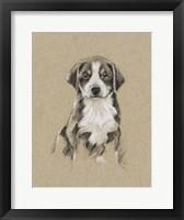 Breed Sketches II Framed Print