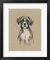 Breed Sketches V Framed Print