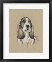 Breed Sketches VI Framed Print