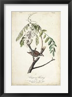 Delicate Bird and Botanical I Framed Print