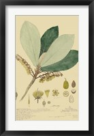 Tropical Descubes I Framed Print